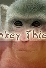 Monkey Thieves Poster