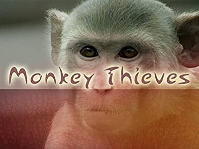 3gp elokuvan Hollywood-lataus Monkey Thieves - Missing in Action [1280x1024] [Mp4] [480p], Colin Collis