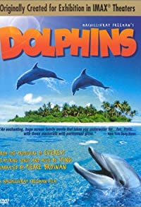 Primary photo for Dolphins