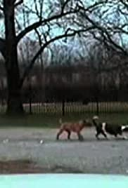 Movie trailer watch online Road Wrecks, Street Scrapes \u0026 Lamebrains [4K