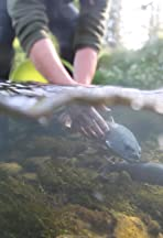 The Story of a Danube Salmon