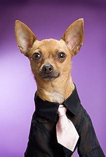 Eli the Chihuahua Picture
