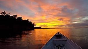 Amazon Arising: Joy in the Jungle