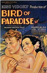 Watch film full movie Bird of Paradise [hdrip] [2048x1536] [1680x1050], Wade Boteler USA