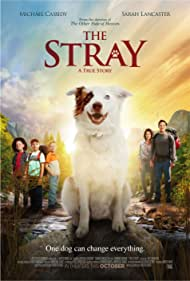 Sarah Lancaster, Michael Cassidy, Connor Corum, Enoch Ellis, and Brennin Williams in The Stray (2017)