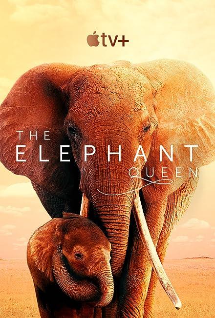 Film: Fil Kraliçesi