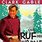 Clark Gable and Buck in The Call of the Wild (1935)