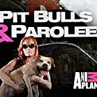 Tia Torres in Pit Bulls and Parolees (2009)