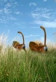 H.264 movie downloads Prairies of Amazonia [1020p]