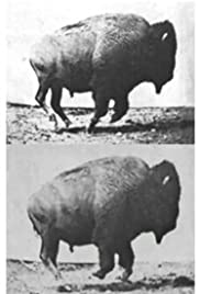 Buffalo Running(1883) Poster - Movie Forum, Cast, Reviews