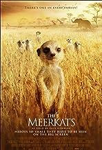 Meerkats: The Movie