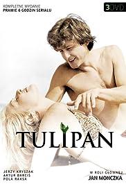 Tulipan Poster
