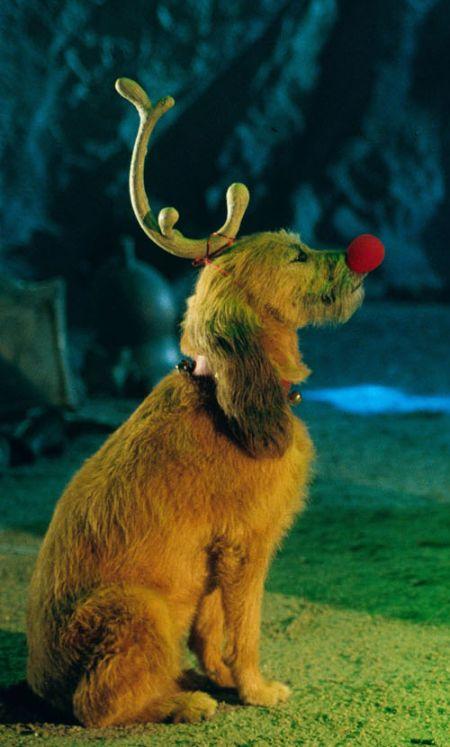 Grinch Stole Christmas Dog.Kelley Imdb