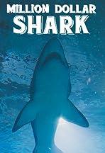 Million Dollar Shark