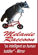 Melanie Raccoon