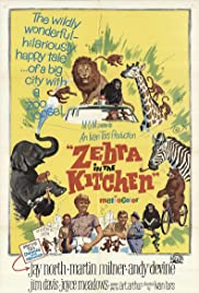 Zebra in the Kitchen (1965) Poster - Movie Forum, Cast, Reviews
