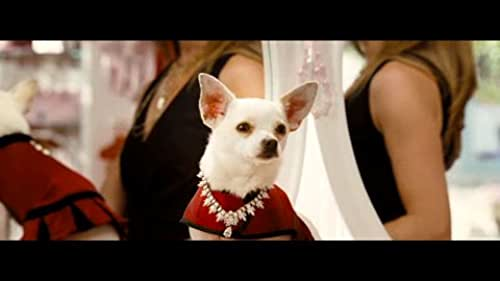 This is the second theatrical trailer for Beverly Hills Chihuahua, directed by Raja Gosnell.