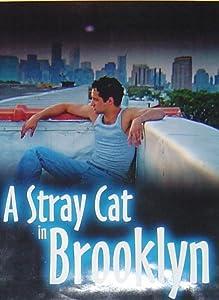 Movie list A Stray Cat in Brooklyn [1280x1024]