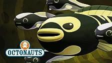 Octonauts and the Convict Fish