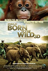 American movie for free download Born to Be Wild by Howard Hall [1280x1024]