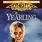 Claude Jarman Jr. in The Yearling (1946)