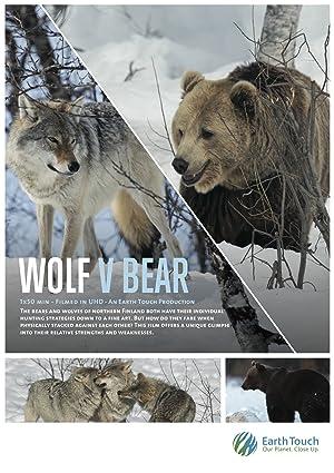 Wolf vs Bear (2018)