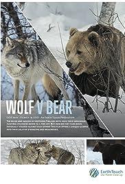 Wolf vs Bear