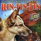 Bob Custer and Rin Tin Tin Jr. in Law of the Wild (1934)