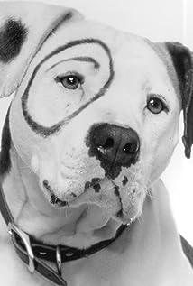 imdb wag the dog trivia