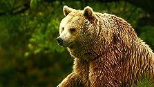 Unedited Footage of a Bear (2014 TV Short)