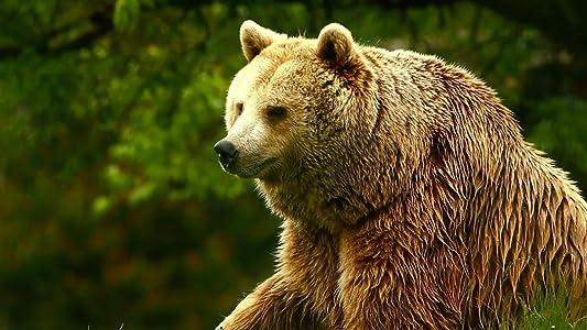 Neueste dvdrip-Film-Downloads Unedited Footage of a Bear  [hd720p] [480x272] [2048x1536]