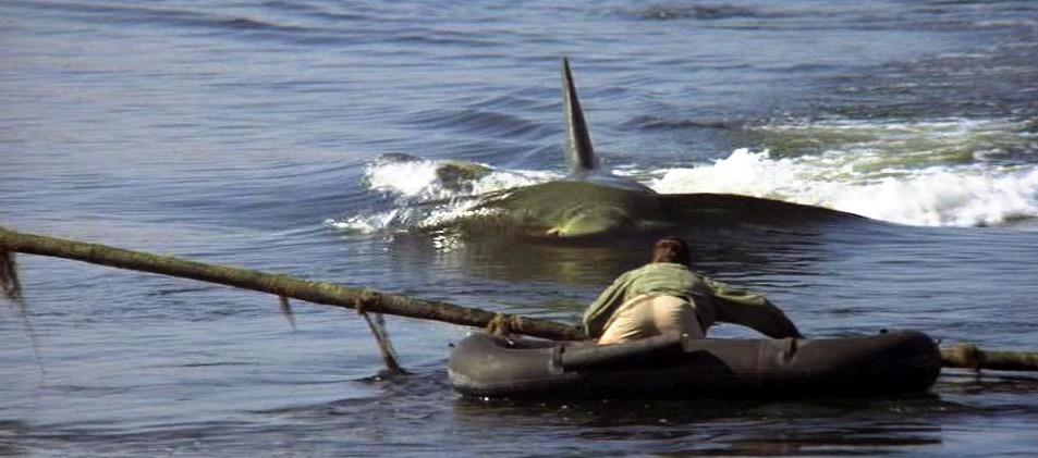 Roy Scheider in Jaws 2 (1978)
