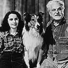 """Courgae of Lassie"" Elizabeth Taylor, Lassie and F. Morgan 1946 MGM MPTV"