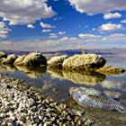 Dead Tilapia fish at the Salton Sea.