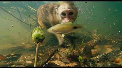 A nature documentary that follows a newborn monkey and its mother as they struggle to survive within the competitive social hierarchy of the Temple Troop, a dynamic group of monkeys who live in ancient ruins found deep in the storied jungles of South Asia.