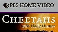 Cheetahs with Holly Hunter