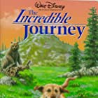 The Incredible Journey (1963)