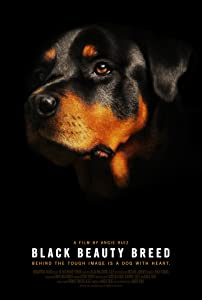 Best site to download 1080p movies Black Beauty Breed [640x640]