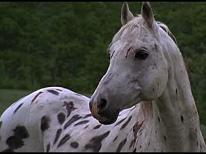 Movie trailers Ghost Horse by none [640x640]