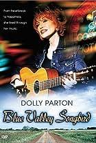 Blue Valley Songbird