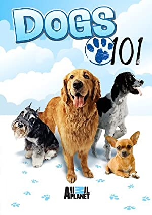 Where to stream Dogs 101