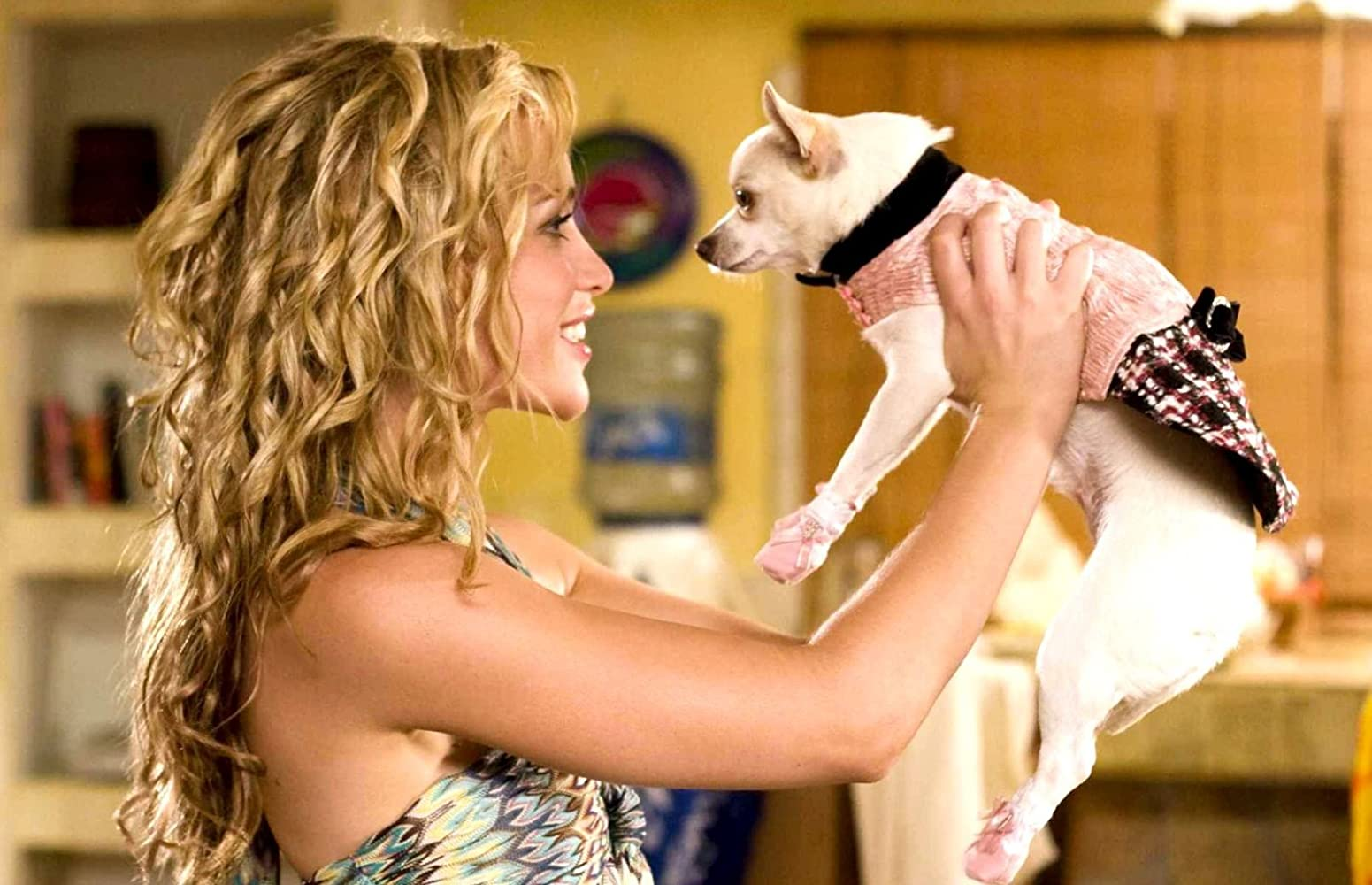 Piper Perabo in Beverly Hills Chihuahua (2008)