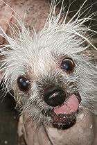 Rascal The World's Ugliest Dog
