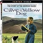 Die Höhle des gelben Hundes (2005)