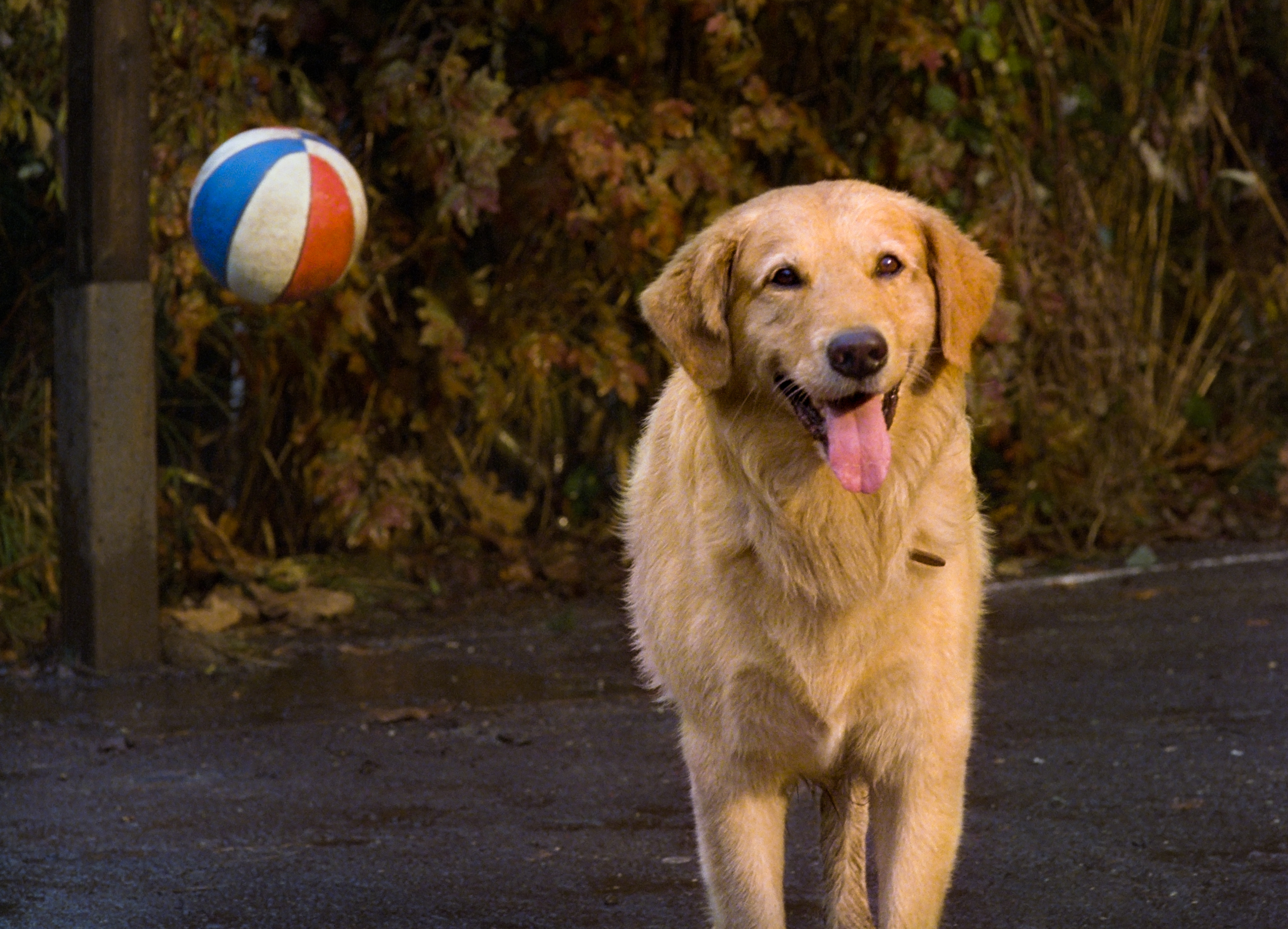 Brendan Fletcher and Kevin Zegers in Air Bud (1997)