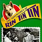 Lee Aaker, James Brown, Serena Sande, and Rin Tin Tin II in The Adventures of Rin Tin Tin (1954)