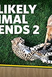 Unlikely Animal Friends Poster