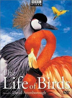 Where to stream The Life of Birds