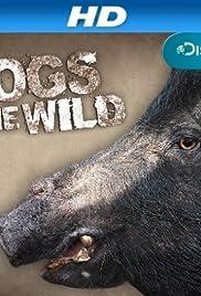 Hogs Gone Wild Poster