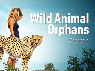 Best free movie downloads iphone Wild Animal Orphans [4K]